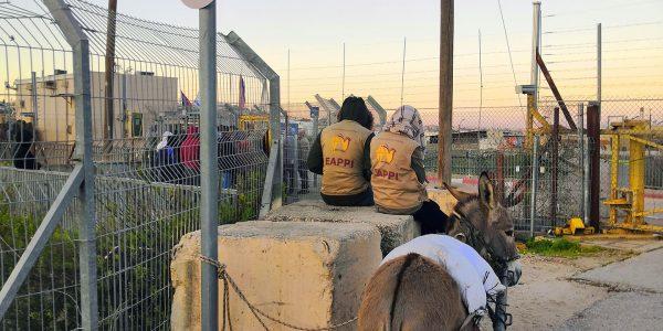 Kaksi EAPPI-tarkkailijaa istuu betonipaaden päällä aasin vieressä tarkastuspisteellä.