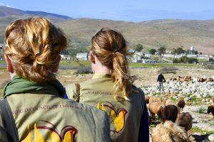 Kaksi EAPPI-tarkkailijaa lammaspaimenessa.