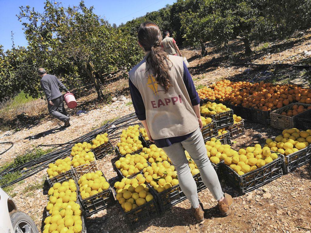 EAPPI-tarkkailija seisoo lukuisten laatikoiden edessä, jotka ovat kukkurallaan sitrushedelmiä viljemän laidalla.